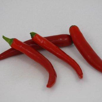 Spaanse peper planten