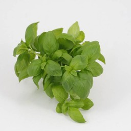 basilicum (9 planten)