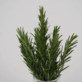 rozemarijn planten