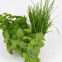 mixpakket kruiden peterselie, basilicum, bieslook (9 planten)