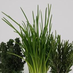 mixpakket kruiden rozemarijn, bieslook, thijm (9 planten)