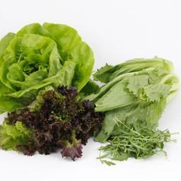 mixpakket sla (9 planten)