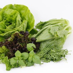 sla en kruiden (9 planten)