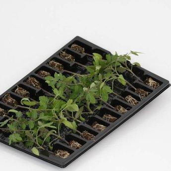 mixpakket kasgroenteplanten