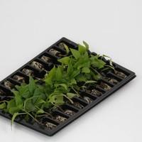 aanbod combipakketten moestuinplanten