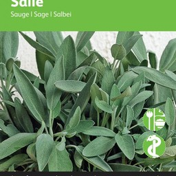 Salie