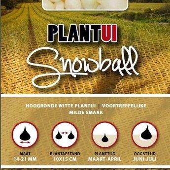 250 gram plantuien snowball