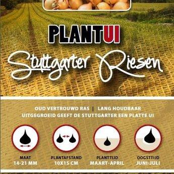 250 gram plantuien stuttgarter riesen