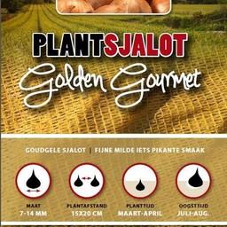 Plantsjalot Golden Gourmet 500 Gram