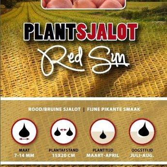 250 gram plantsjalotten red sun