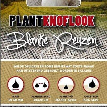 250 gram plantknoflook blanke reuzen
