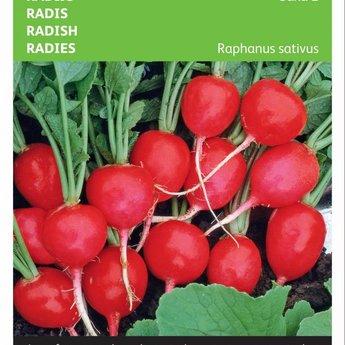 Radijs Saxa groentezaden