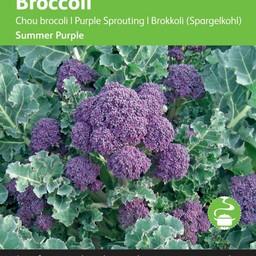 Broccoli Paars zaad