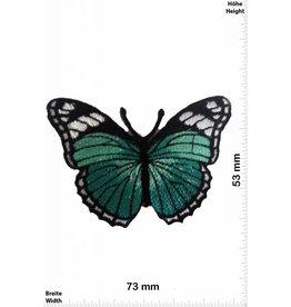 Schmetterling, Papillon, Butterfly Schmetterling -blaugrün