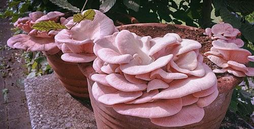 Vermehre Deine Pilzpaket Pilzzucht Mit Frischem Kaffeesatz Das Pilz