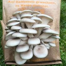 Pilzpaket Der oder die Beschenkte kann einfach selbst seine Pilzsorte und den Lieferzeitpunkt bestimmen.