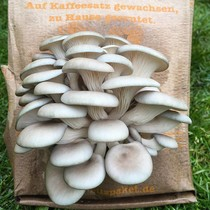 Pilzpaket Pilzbrut Shiitake (Shii-Take) zur Herstellung von eigenem Pilzsubstrat