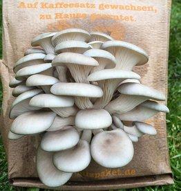 Pilzpaket graue Austernpilze