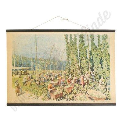 Vintage schoolplaat katoenplantage