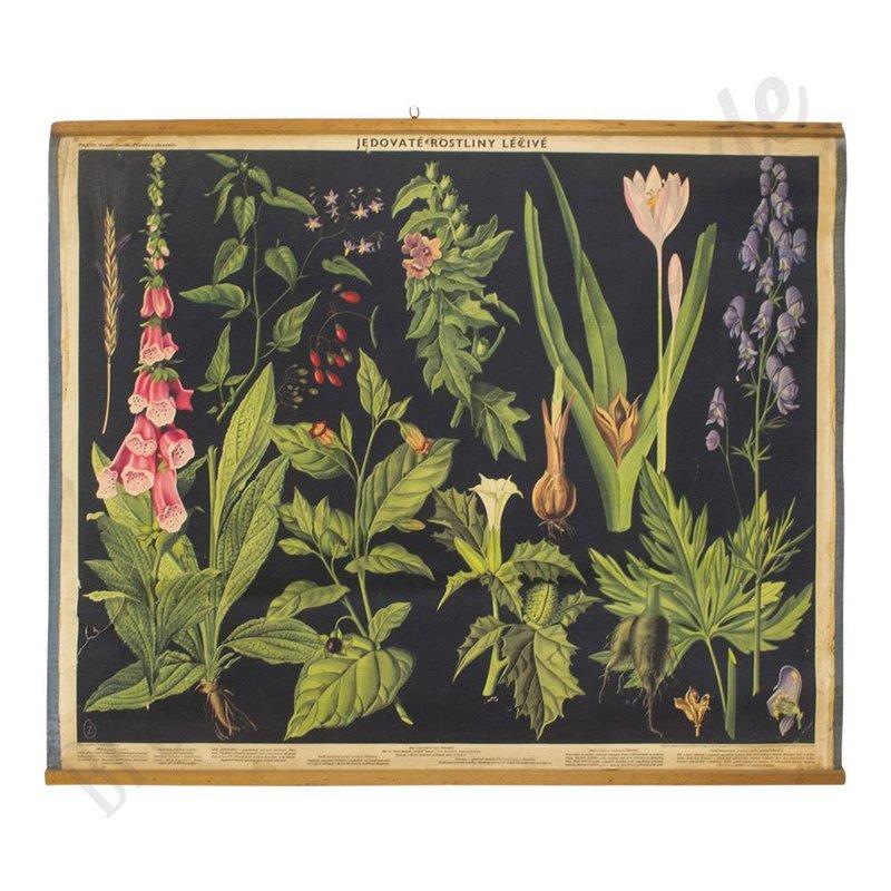 Vintage schoolplaat bloemen