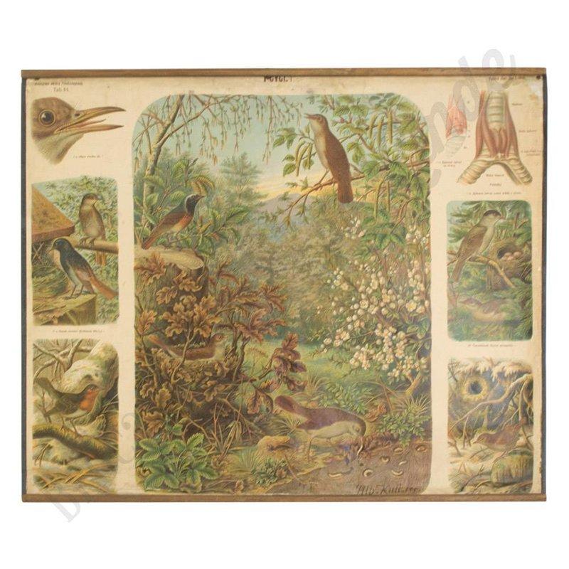 Oude schoolplaat met verschillende vogels