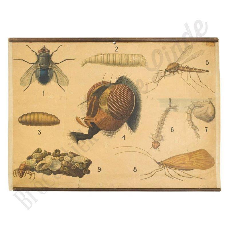 Vintage schoolplaat van verschillende soorten vliegen