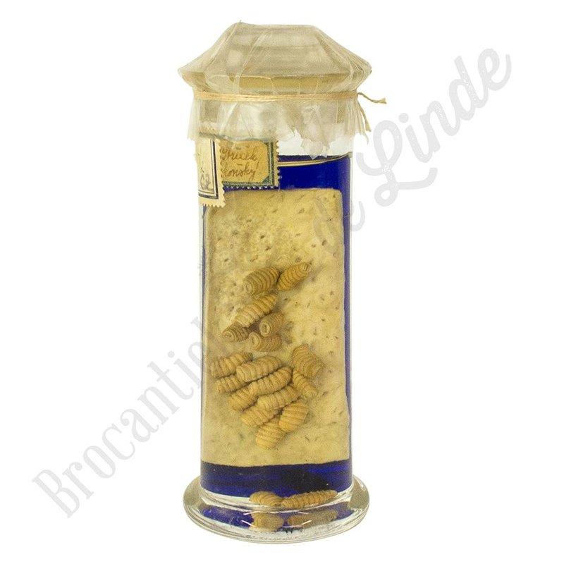 Antiek anatomisch preparaat van maden op huid
