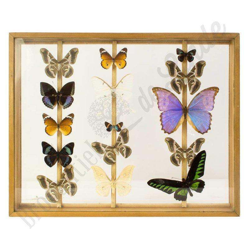 """Vintage vlinderlijst """"Vlinders XL No.1"""""""