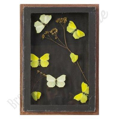 """Vlinderlijst met citroenvlinders - """"No. 2"""""""