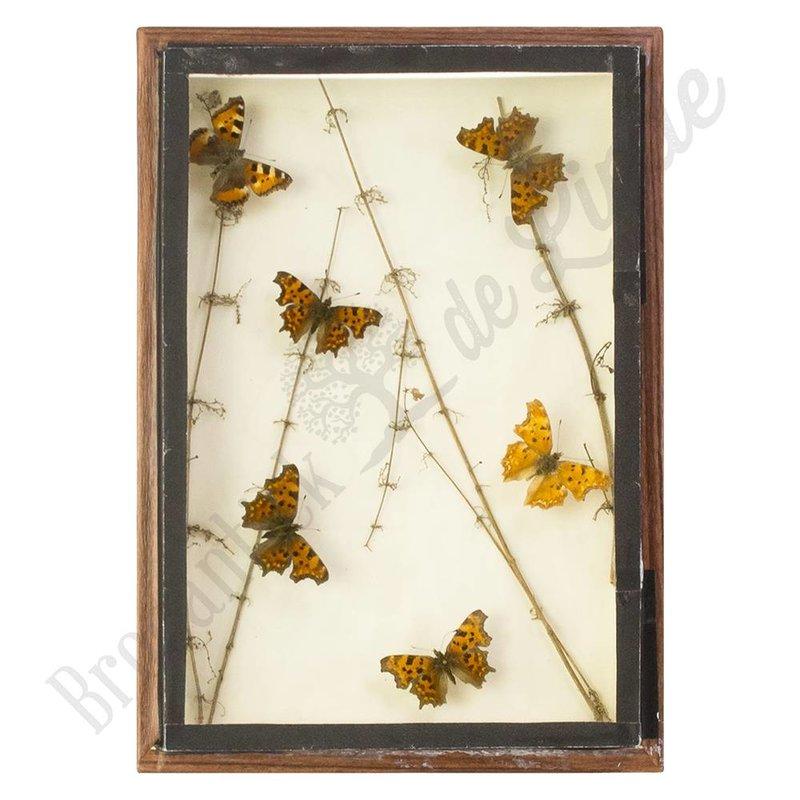 "Oude vlinderlijst met Europese vlinders ""No. 4"""