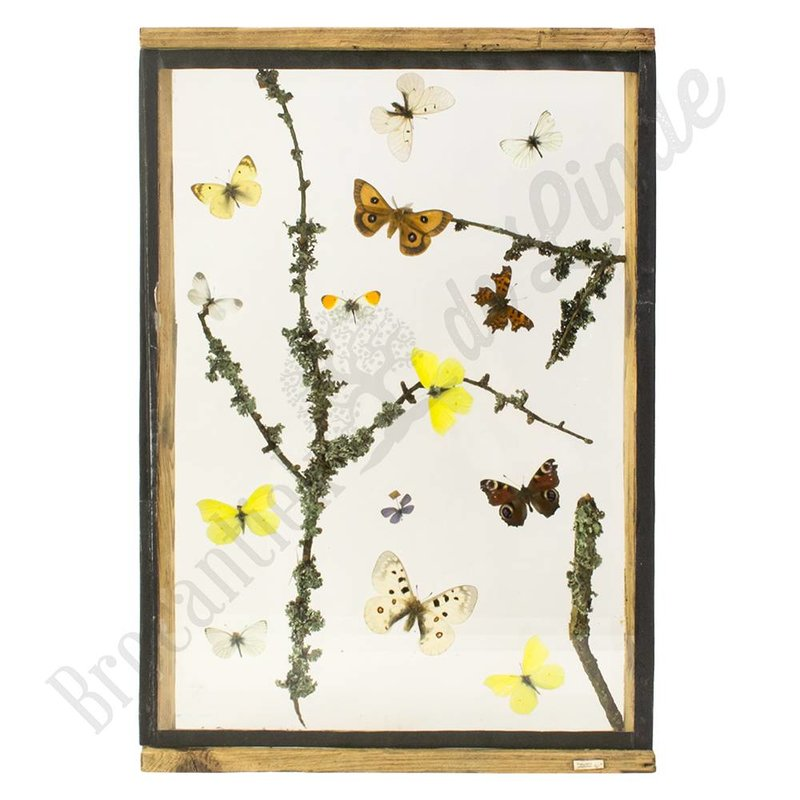 """Vlinderlijst met verschillende Europese vlinders """"No. 5"""""""