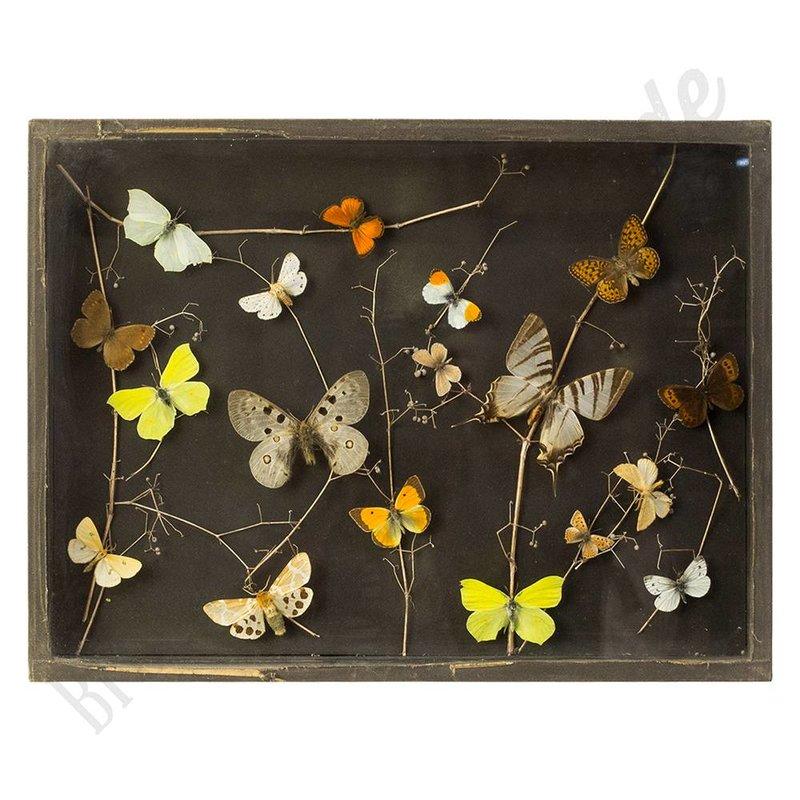 """Vintage vlinderlijst met Europese vlinders """"No. 6"""""""