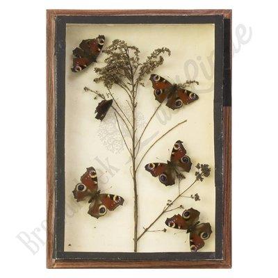 Verschillende soorten vlinders nr. 8