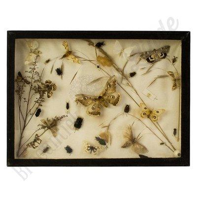 Verschillende soorten vlinders en mestkevers nr.10