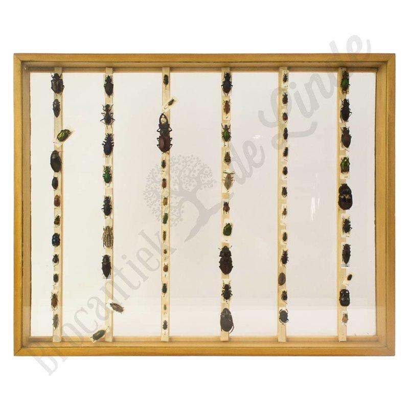 """Oude vlinderlijst met verschillende soorten kevers """"No. 11"""""""