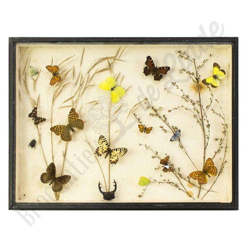 """Vlinderlijst met verschillende soorten vlinders """"No. 12"""""""
