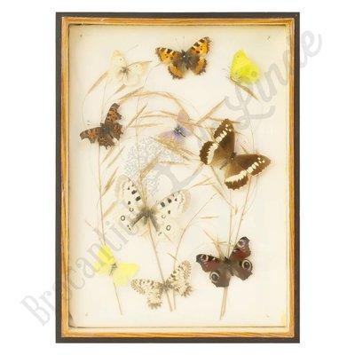 Verschillende soorten vlinders nr. 14
