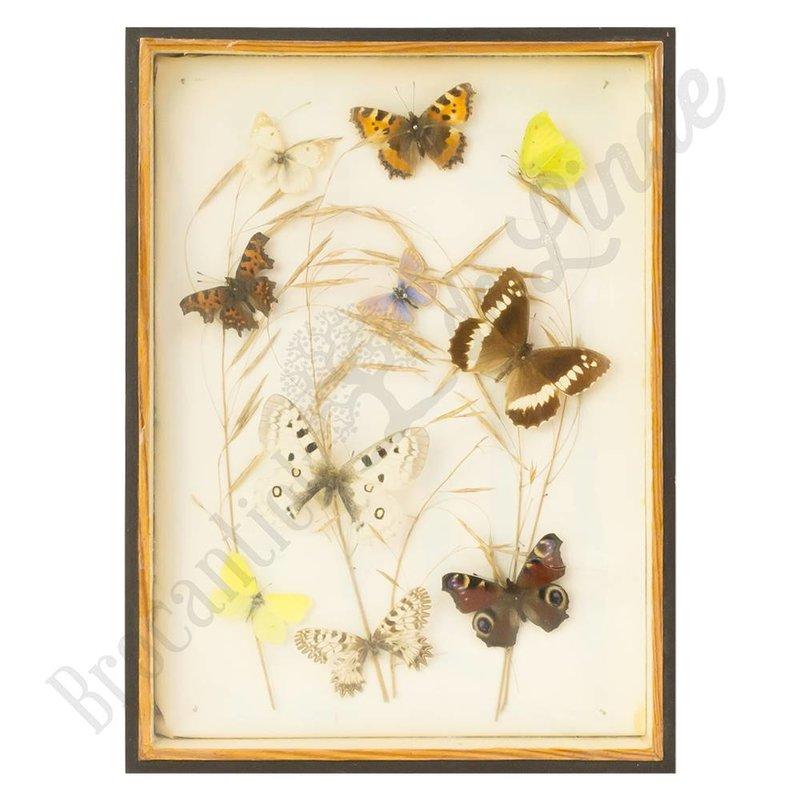 """Vintage vlinderlijst met verschillende vlinders """"No. 14"""""""