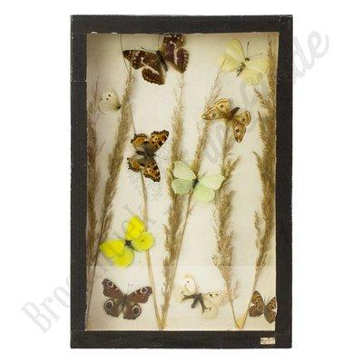 Verschillende soorten vlinders nr. 15