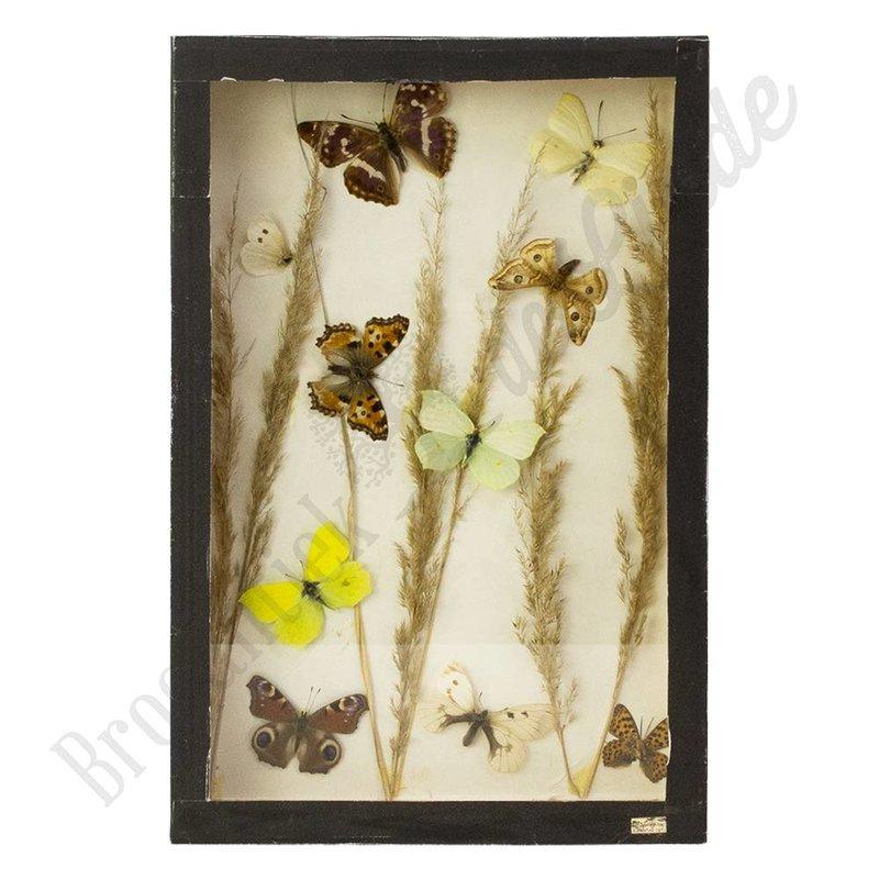 """Vintage vlinderlijst met verschillende Europese vlinders """"No. 15"""""""