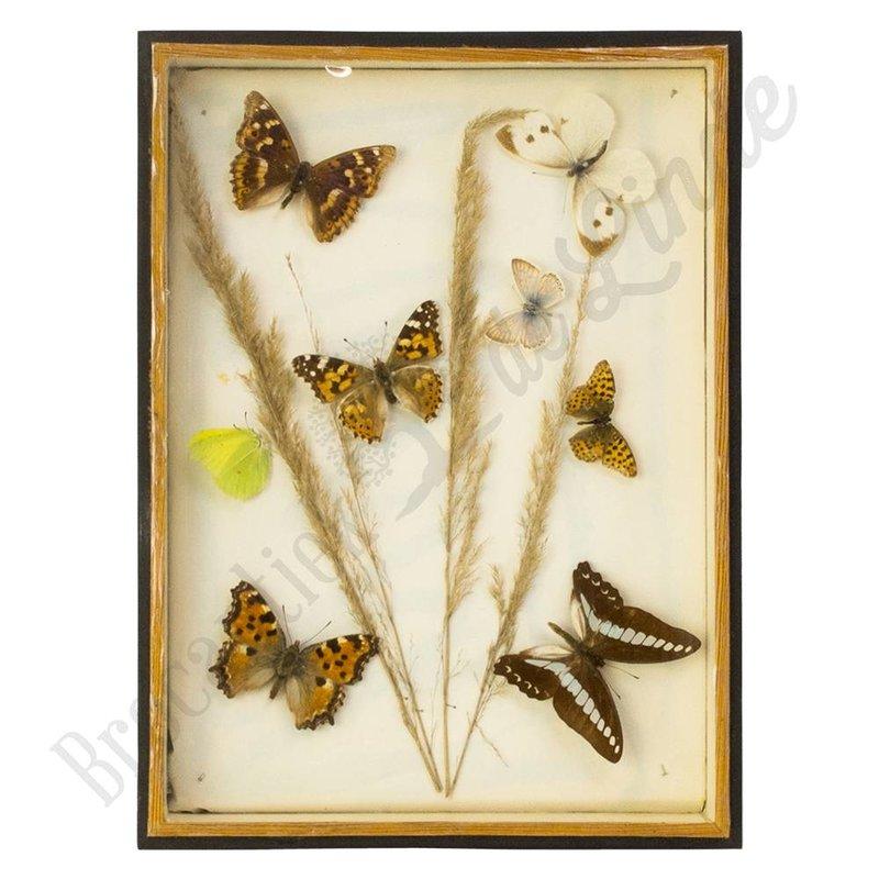 """Oude vlinderlijst met verschillende soorten vlinders """"No. 16"""""""
