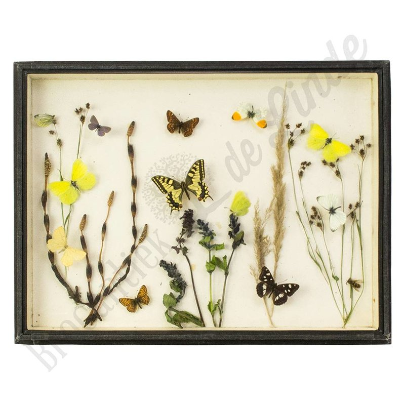 "Oude vlinderlijst met Europese vlinders ""No. 17"""