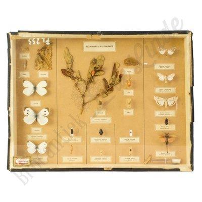 Verschillende soorten vlinders nr.18