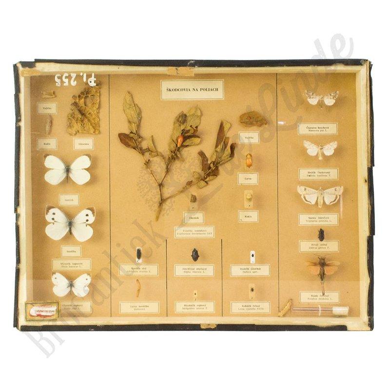 Verschillende soorten vlinder nr. 18