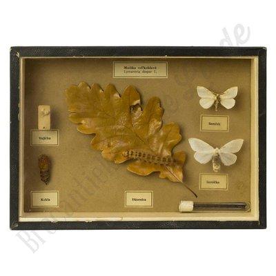 "Vlinderlijst 'Lymantria dispar'- ""No. 19"""