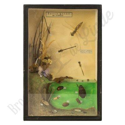 """Vlinderlijst  insecten - """"No. 20"""""""