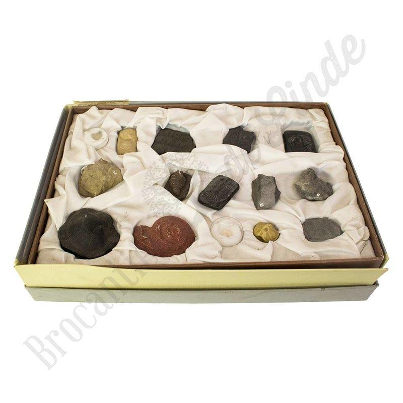 Verzameling replica fossielen uit oude school