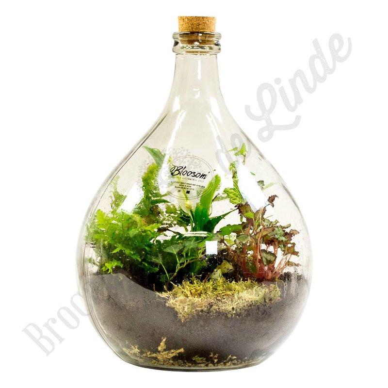 """Plant terrarium """"Urban Jungle - large"""""""