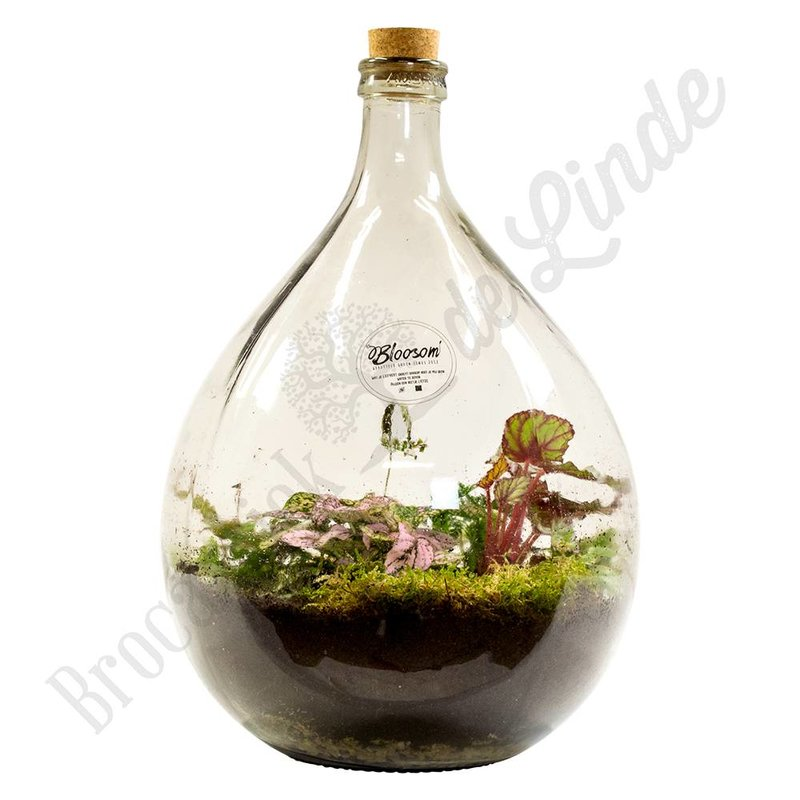 "Plant terrarium ""Urban Jungle XL"""