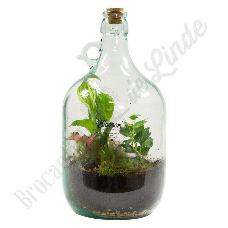 """Plant terrarium """"Urban Jungle medium"""""""